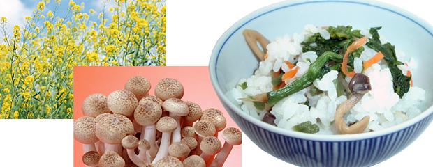 旬の菜の花しめじご飯